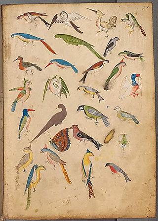 Birdspage